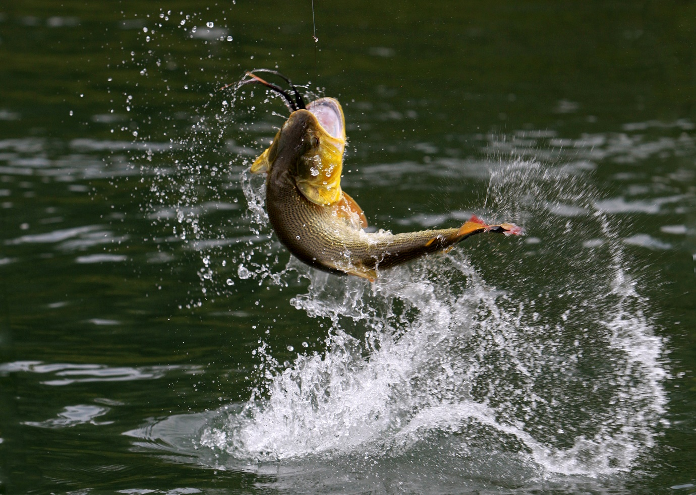 Five Delicious Entrées for the Lake Fish You Just Brought Back to your Lakehouse 2 Fish Jumping Intro On The Lake Living